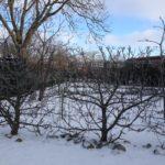 Discovery Æblehækplanter