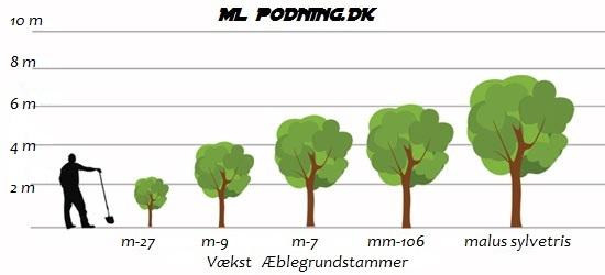 Mm106 grundstamme