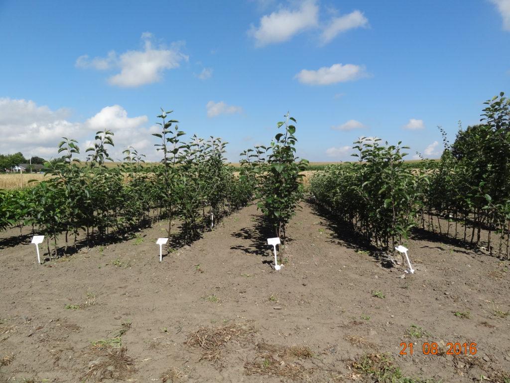Diverse frugttræer